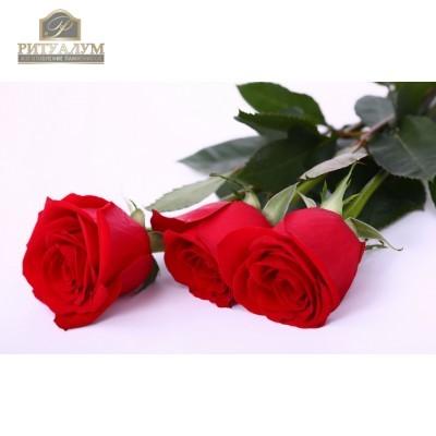 Роза красная 70см